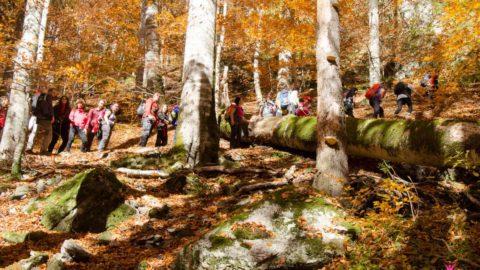 Drumetie montana pe Valea lui Stan